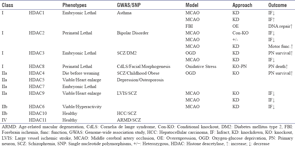 Table 2: Histone deacetylase knockout mice and ischemic outcome