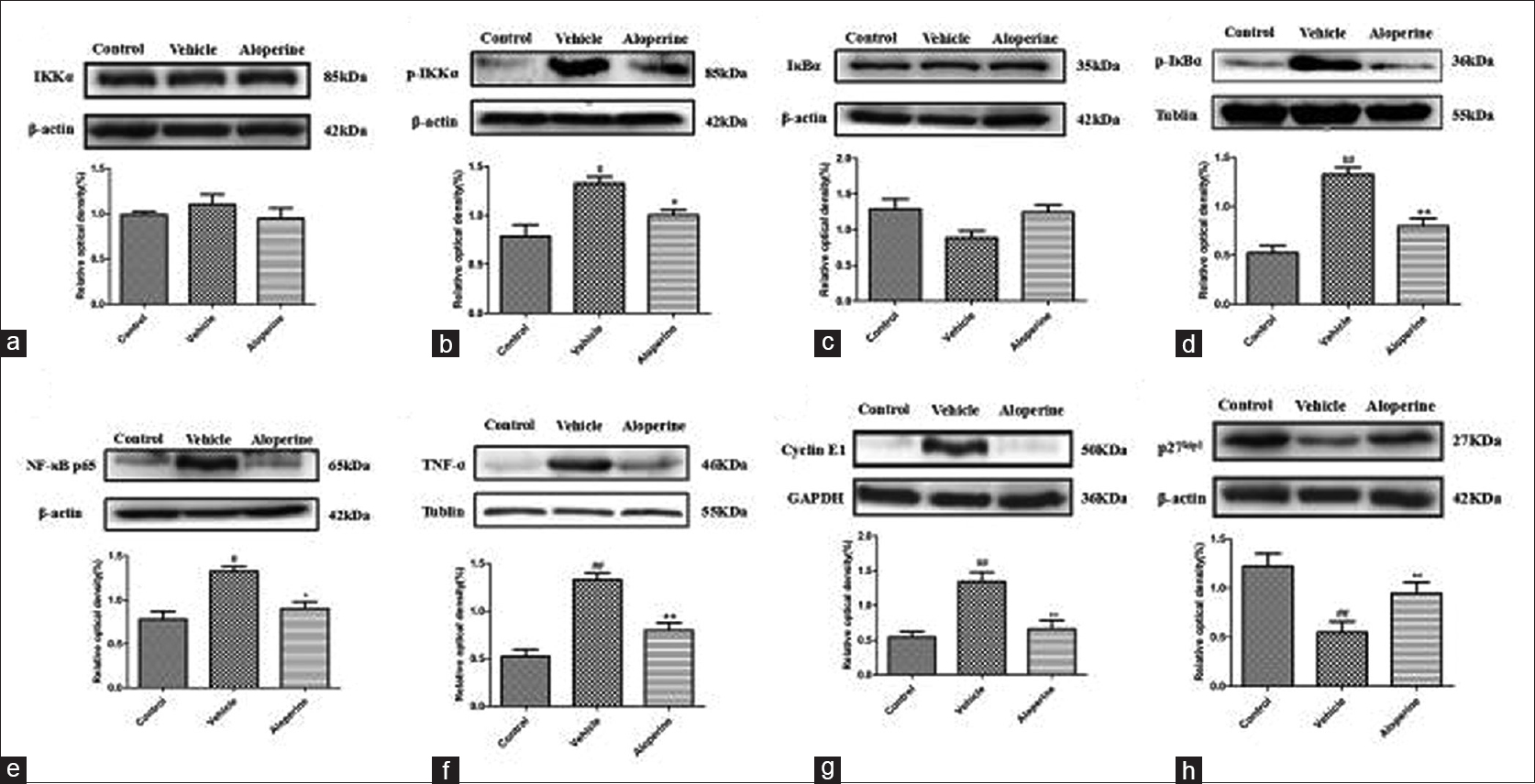Figure 4: Effects of Aloperine on the inactivation of signaling pathways in PDGF-BB stimulated HPASMCs. HPASMCs were treated with Aloperine (0.5 mM) for 24 h after treatment with 20 ng/ml PDGF-BB. The protein expression levels of (a) IKKα, (b) p-IKKα, (c) IκBα, (d) p-IκBα, (e) NF-κB p65, (f) TNF-α, (g) Cyclin E1 and (h) p27<sup>kip1</sup> were determined by Western blot analysis. One representative image out of three independently performed experiments is shown. Values are expressed as the mean ± standard deviation. <sup>##</sup><i>P</i> < 0.01, <sup>#</sup><i>P</i> < 0.05 versus the control group; **<i>P</i> < 0.01, *<i>P</i> < 0.05 versus the PDGF-BB treated cells. Vehicle; the PGDF-BB group: Platelet-derived growth factor-BB; HPASMCs: Human pulmonary artery smooth muscle cells
