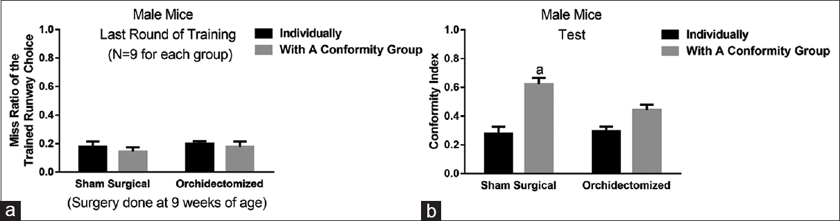 Figure 5: Performances in the sucrose pellet-supported runway choice conditioning and test in sham surgical and orchidectomized male mice. (a) When the surgery was done at 9-week-old male mice, sham surgical and orchidectomized mice exhibited low and comparable miss rates of trained runway choice at the last round of operant training. (b) Sham surgical, not orchidectomized, male mice receiving the test with a group exhibited higher conformity index as compared with the male mice receiving the test individually.<sup>a</sup>Higher than the groups receiving the conformity individually.